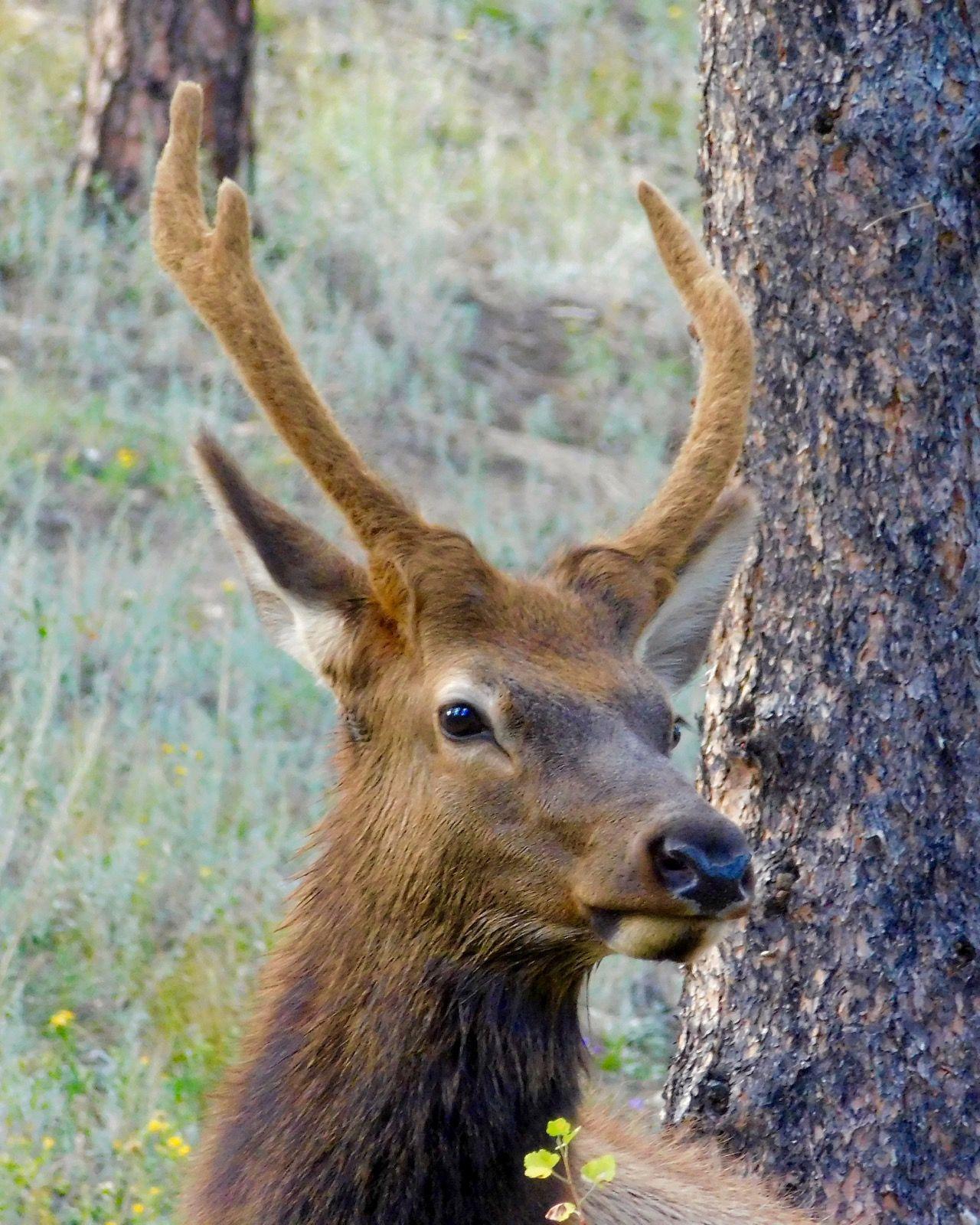 Wildlife Encounters Early Autumn Wildlife, Early fall