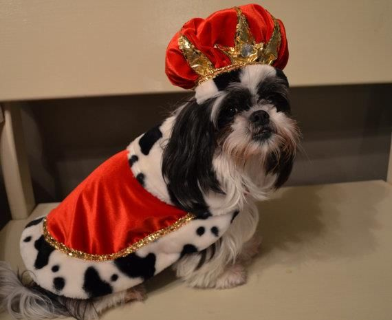 Be Royalty for a day in this Birthday King/Halloween Dog Costume for small/medium breed dogs by sewdoggonecreative http://petuoso.com/s/be-royalty-for-a-day-in-this-birthday-kinghalloween-dog-costume-for-smallmedium-breed-dogs-by-sewdoggonecreative/
