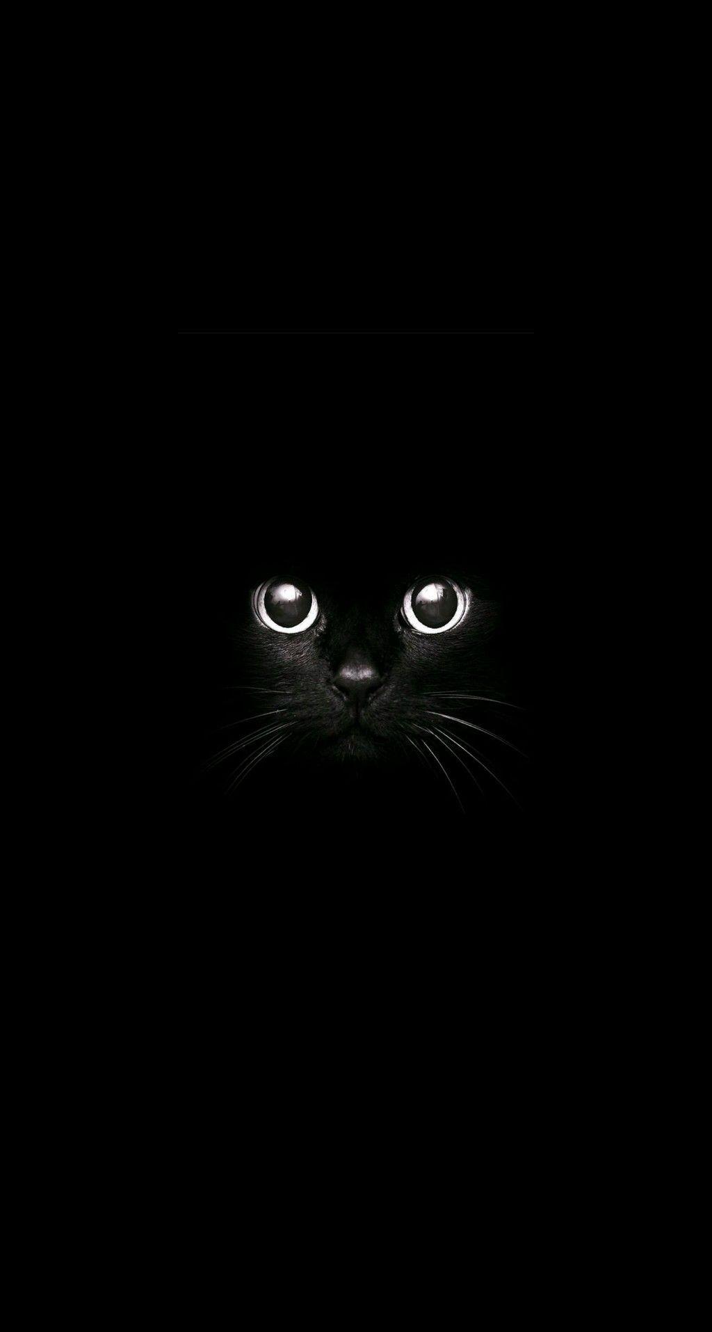 Pin By Brigitte Bachmeier On Shoes In 2020 Black Cat Art Cat Wallpaper Cat Photography