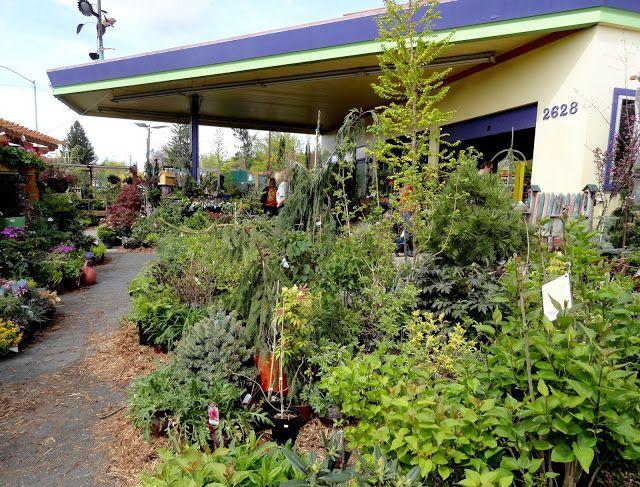 Judy S Enchanted Garden Spokane Wa A Favorite Of Mine Perennialsnurseries