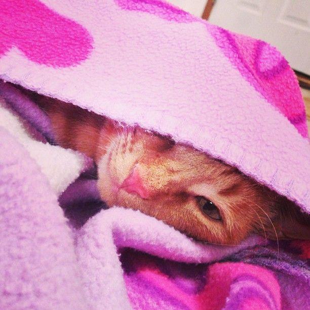 Simba. #cats
