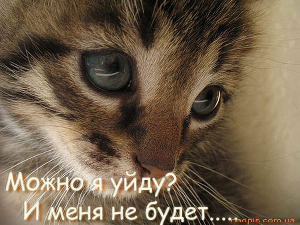Для, картинки котов с надписями грустные