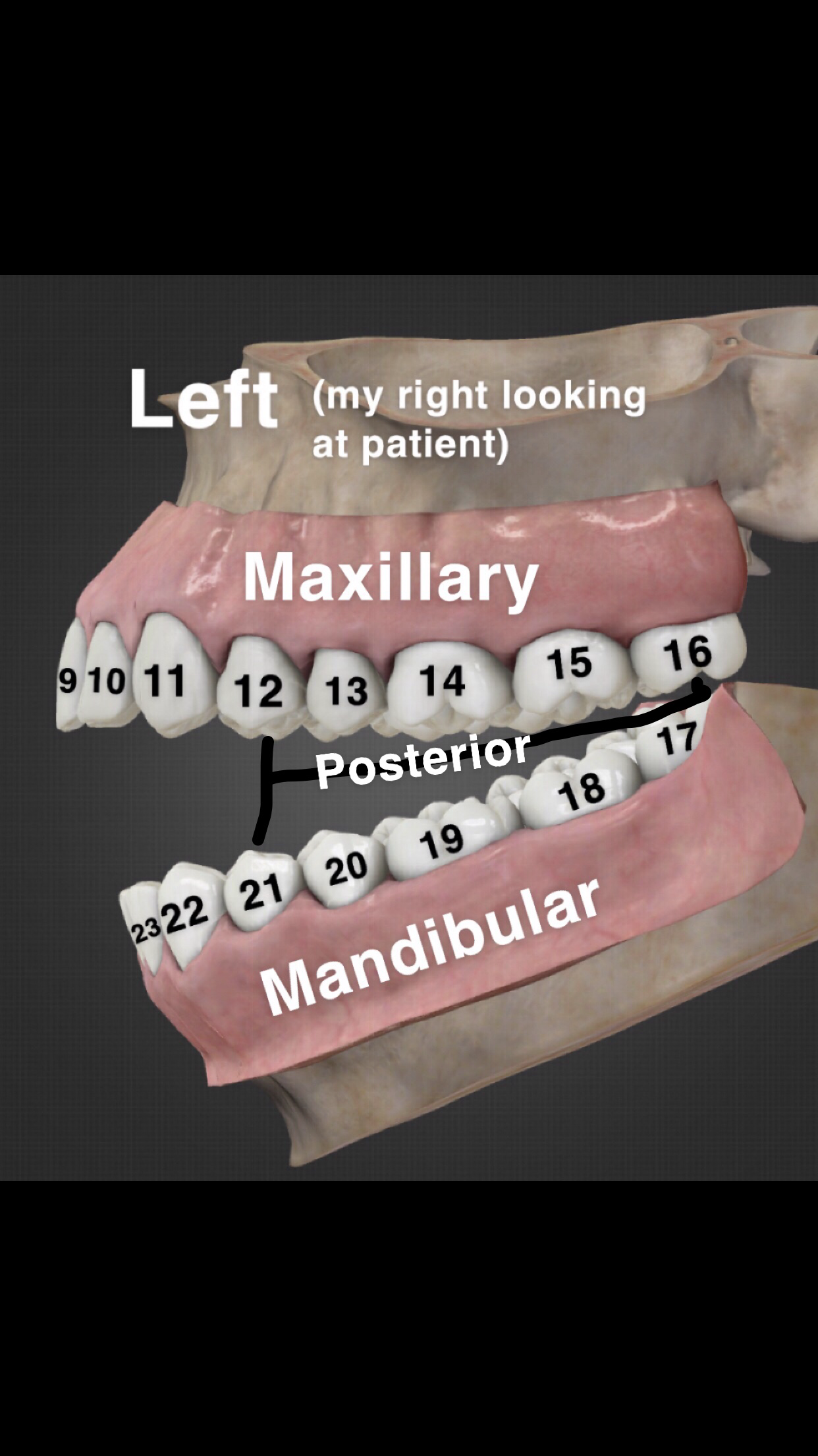 I'm new to the Dental Assisting world so I made this for myself to memorize the numbers of the teeth