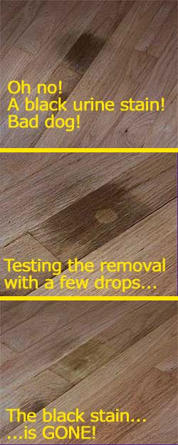 A quick and inexpensive way to remove black pet urine stains from hardwood floors!