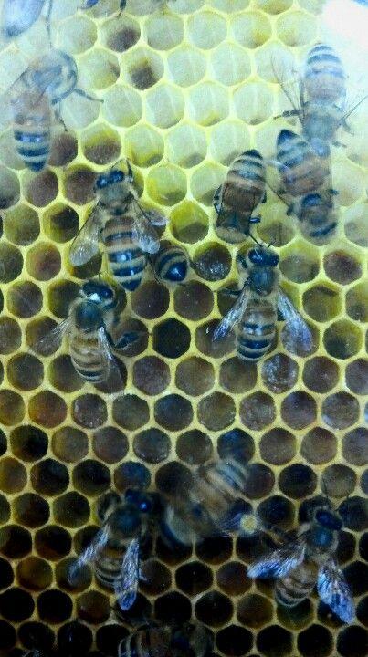 Bees... Love their honey!