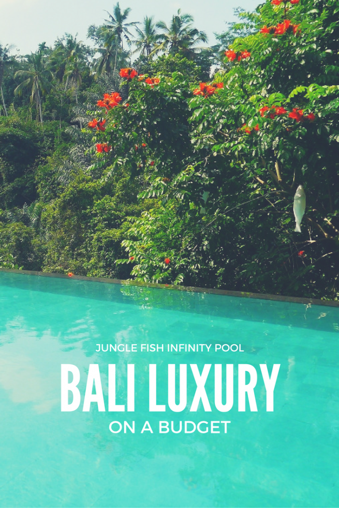 Luxury On A Budget At Jungle Fish Infinity Pool In Bali Budget