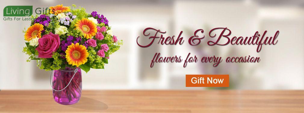 Buy Plants In Delhi Plant Nurseries In Delhi Gift A Plant