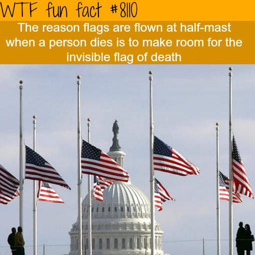 Why Flags Are Flown Half Mast Wtf Fun Facts Wtf Fun Facts Fun Facts Weird Facts