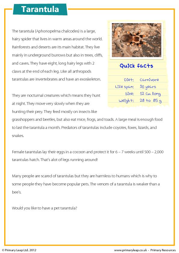 KS2 Reading Comprehension - Tarantulas | Teachin\' | Pinterest ...