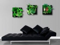 tableau mural plantes  |  www.frenchimmo.com