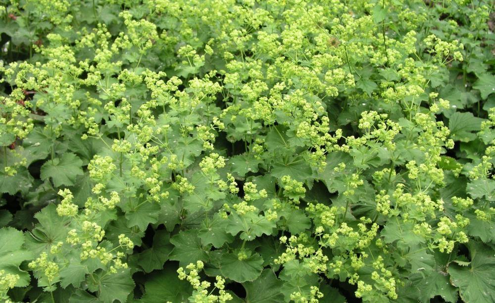 144 best Pflanzenschutz images on Pinterest Crop protection - unkraut im rasen