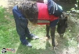 Image result for donkey singing meme