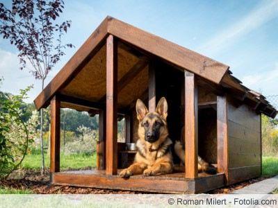 Isolierte Hundehütte selber bauen Anleitung in 7 Schritten