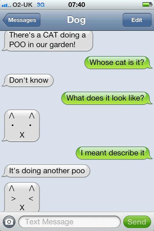 Describe the cat…