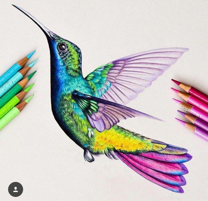 Picaflor Aves Arte De Colibri Colibri Dibujo Pintura De Colibri