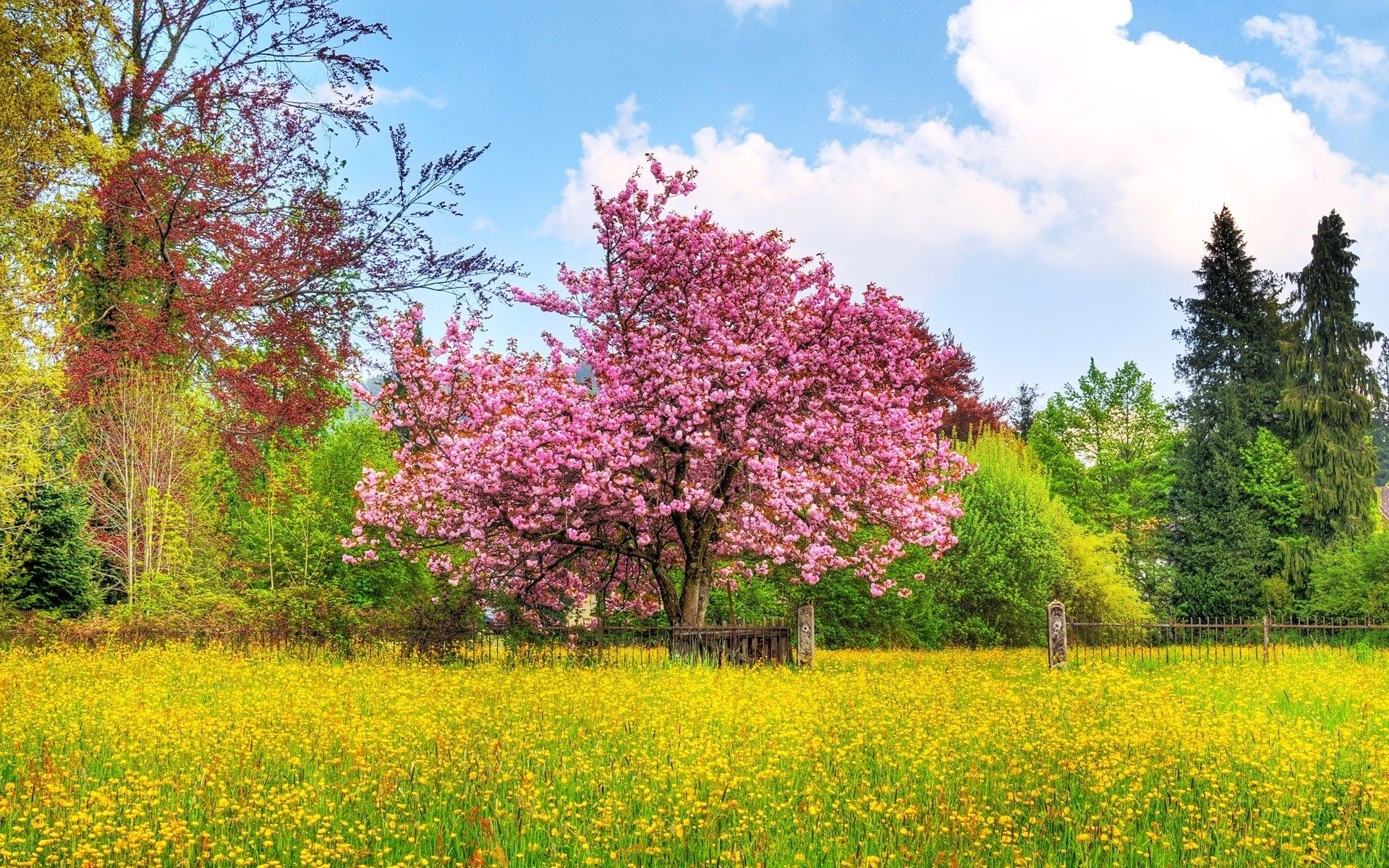 1920 x 1200 px free high resolution wallpaper spring scenes by