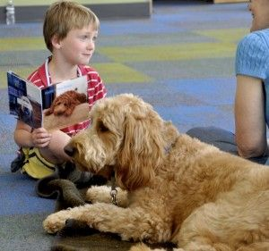 """Five-year-old Jack Scholtz, of Plymouth, reads a copy of """"Herbie's New Home"""" to the book's inspiration – therapy dog Herbie at the Plymouth Library July 8. (Sun staff photo by Brian Rosemeyer)  Herbie is a Goldendoodle from Red Cedar Farms in Hutchinson, MN"""