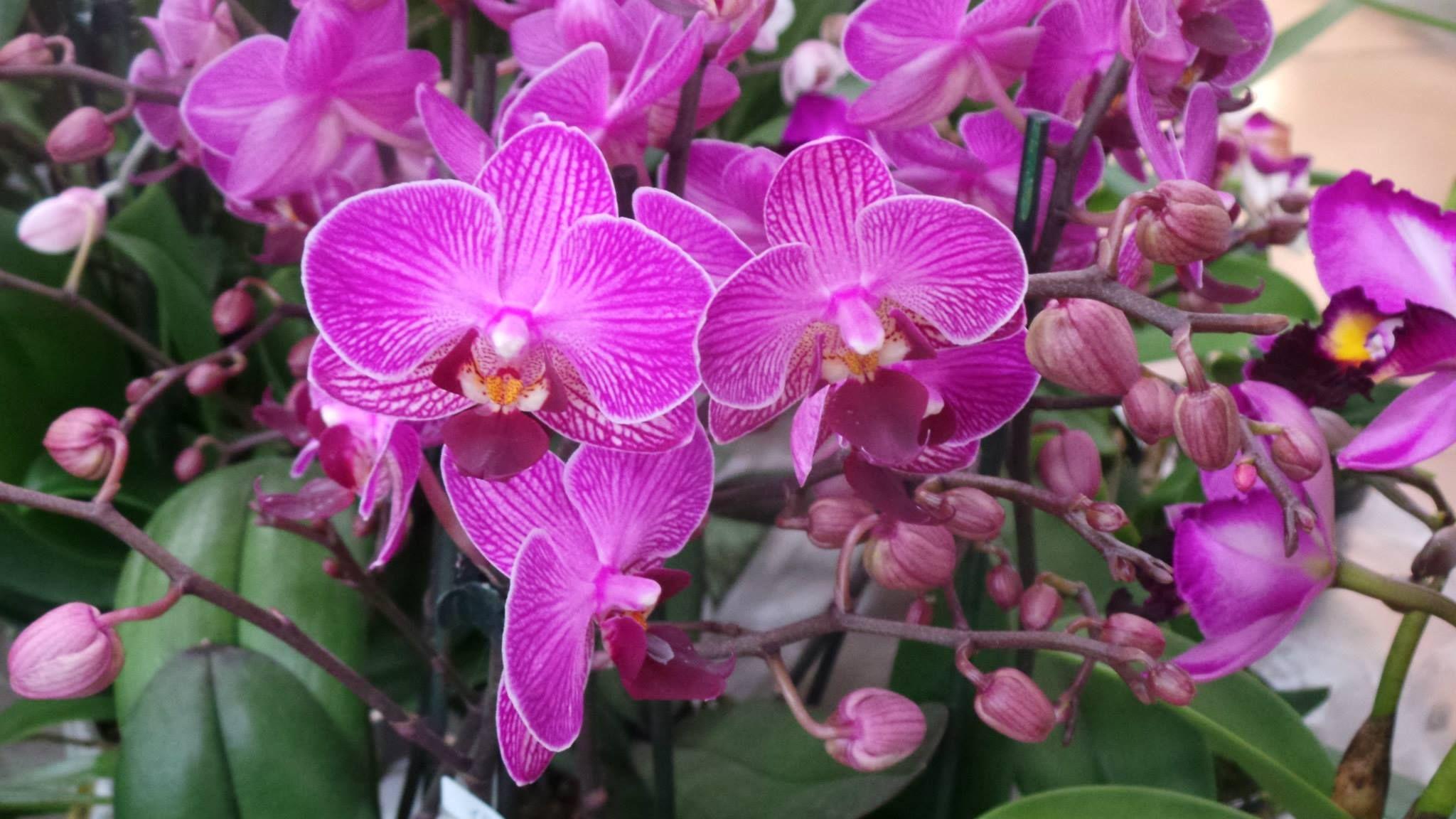 Ecco le foto dell'evento #Orchidee una Medicina per L'anima a cura di Giancarlo Pozzi. Grazie a tutti per aver partecipato!