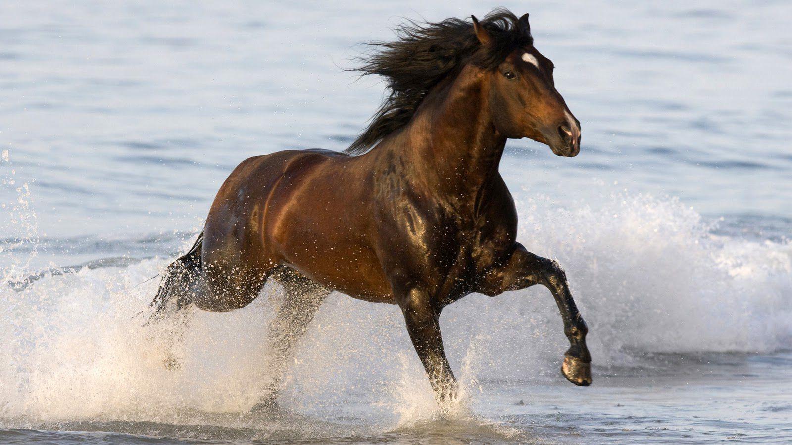 Fantastic Wallpaper Horse Beach - cf351549113f213ca53292997fe9c887  Trends_732110.jpg