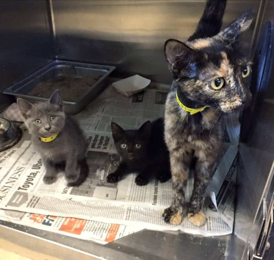 (99) URGENT FL KILL SHELTER CATS (GROUP) URGENT!!! Shelter