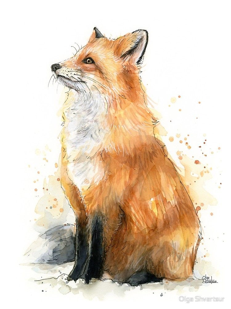 'Watercolor Fox Painting' Poster by Olga Shvartsur