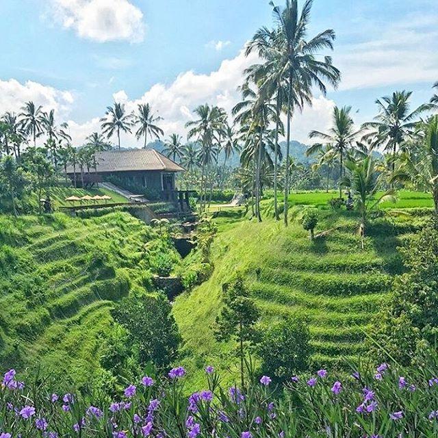 Secret Garden Village a hidden treasure at Luwus Village