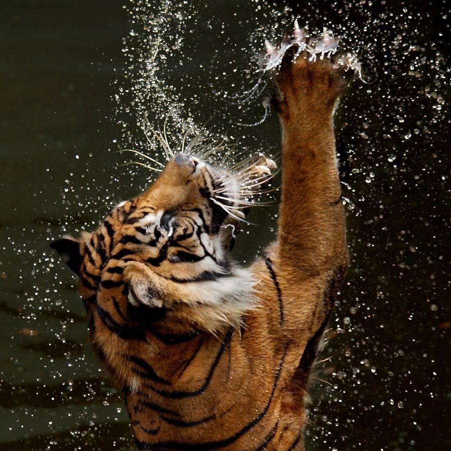 Tiger Tyson kostenlose Videos