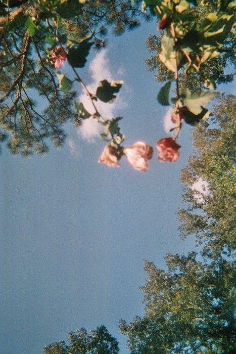 Flowers In The Attic Flowers In The Attic Flower Aesthetic Aesthetic Wallpapers