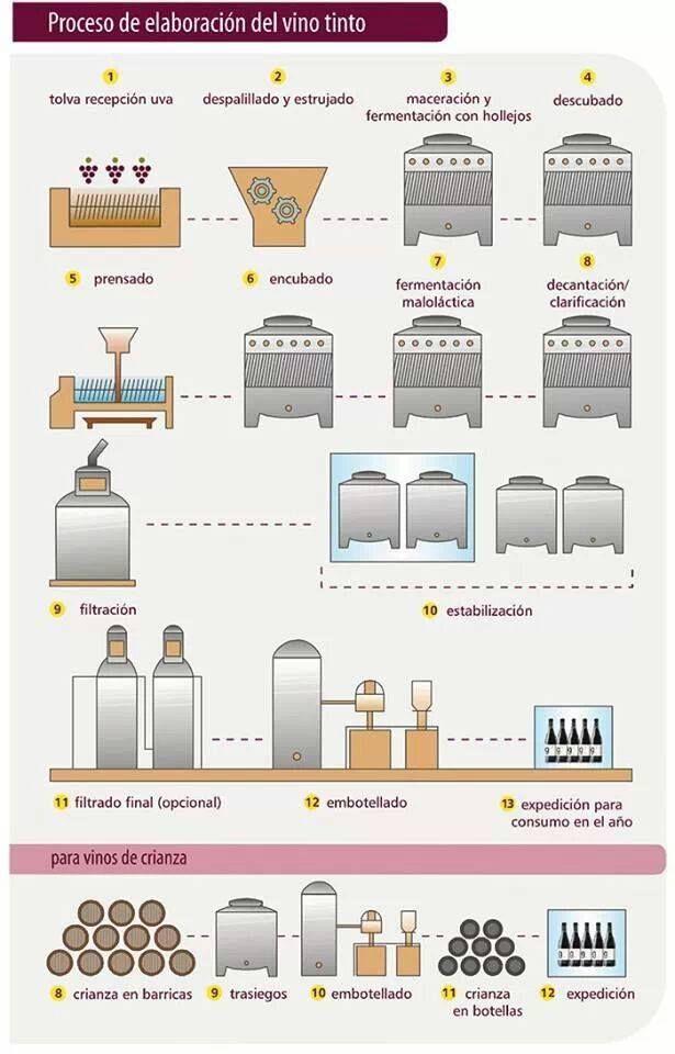 Proceso De Elaboración Del Vino Tinto Wine Tasting Near Me Wine Folly Wine Knowledge