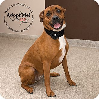 Pin by WVyourWay on Adoptable Animals West Virginia and