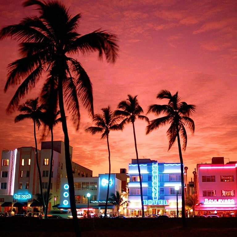 Palm trees and Miami vibes MiamiEdition Quinny South