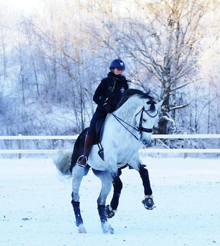 I am sure the snow is hard to live in ....but I would love to ride once or twice in it