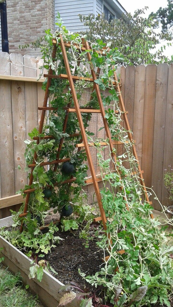 Watermelon trellis with bird netting pockets garden ideas