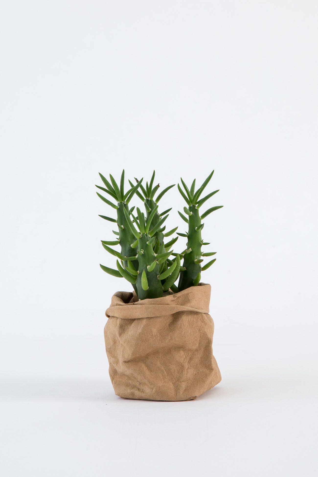 Uashmama Washable Paper Bag Brown Painted Plant Pots Terracotta