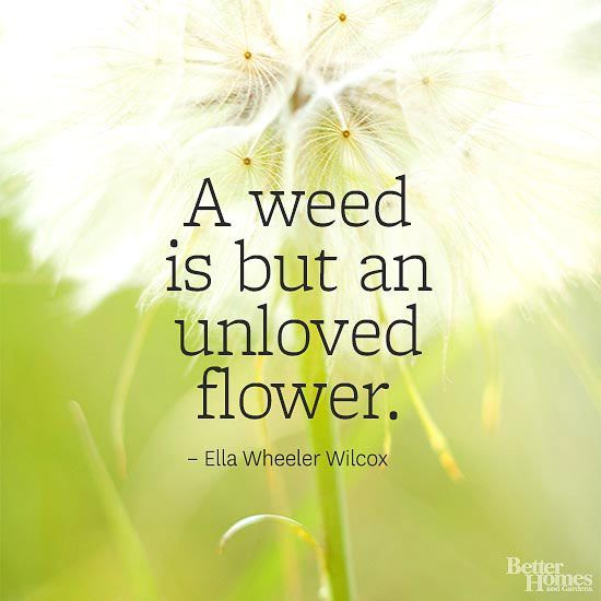 Flower Quotes Gardening Quotes Funny Dandelion Quotes Garden Quotes