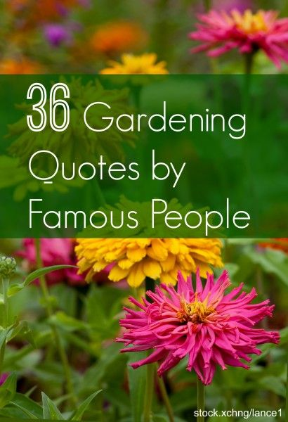 Get Motivated With Some Inspirational Gardening Quotes By Famous