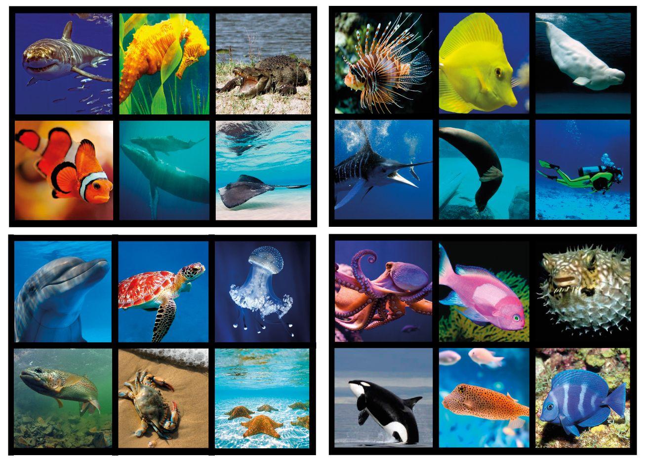 Kleurplaten Van Onderwaterdieren.Kleuter Leermiddelen En Digibord Hulpmiddelen Thema Zee