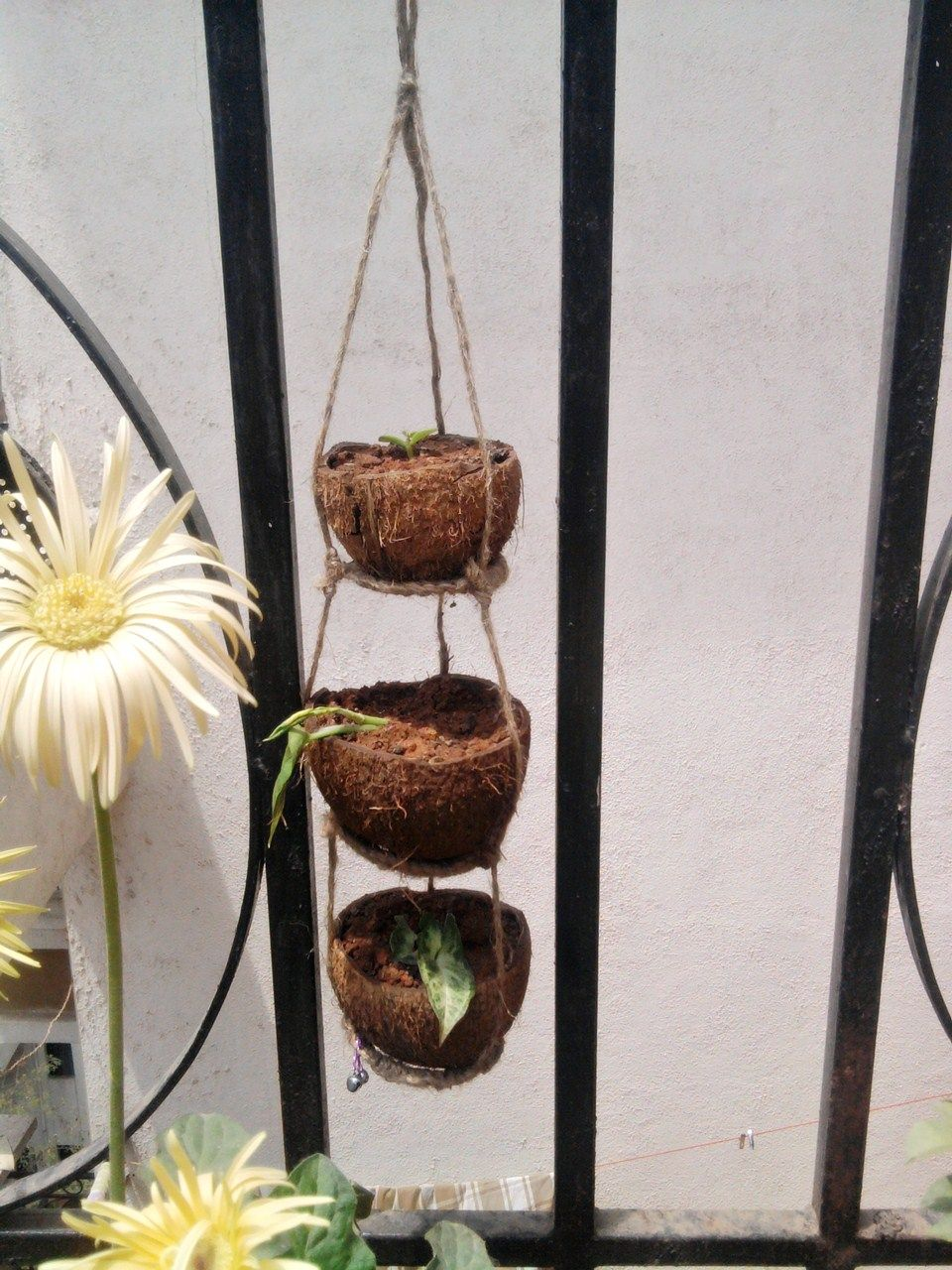 How to Make a Coconut Shell Hanging Basket