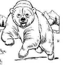 Pin By Aleksandra Nowak On Animal Pyrography Bear Coloring Pages Teddy Bear Coloring Pages Polar Bear Coloring Page