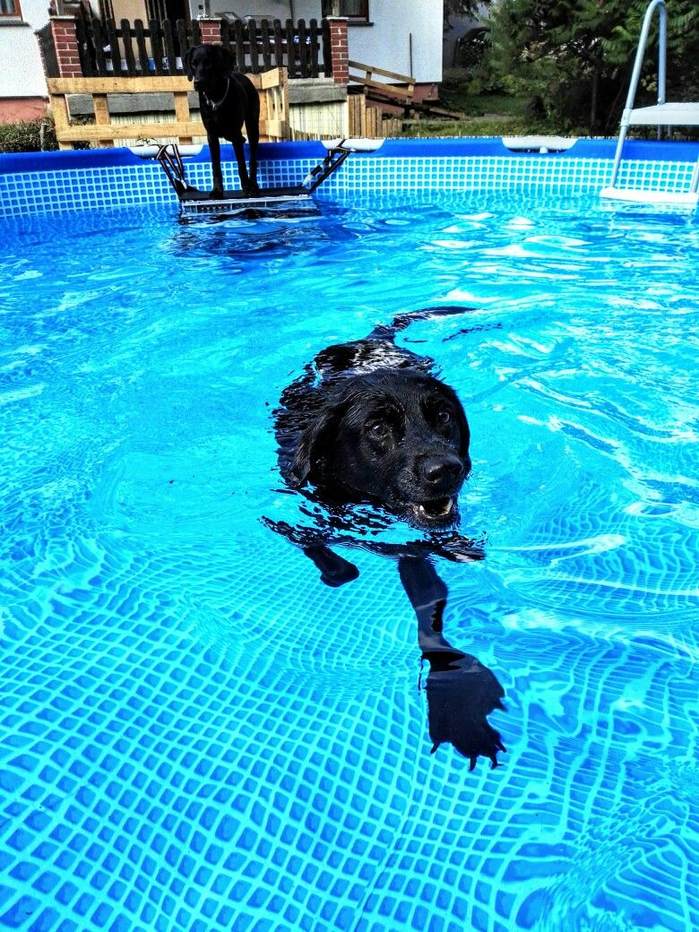 Old dog with arthrosis loves our swimming pool pool for Garten pool leiter