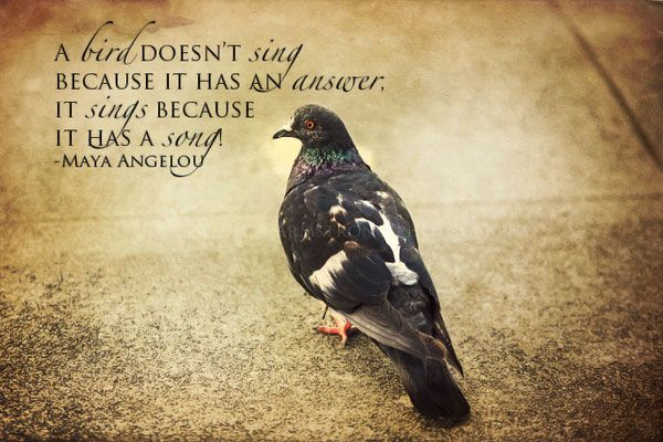 Bird Image Quotes And Sayings Page 1 Bird Quotes Image Quotes Going Home Quotes