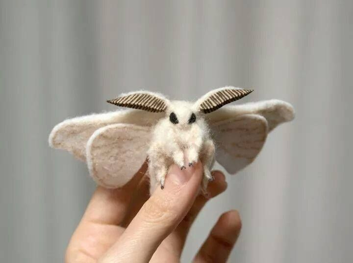 Venezuelan Poodle Moth A Newly Discover Species With Images