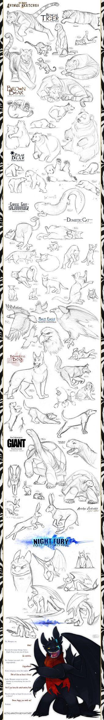 Animal Sketches by Altalamatox on deviantART