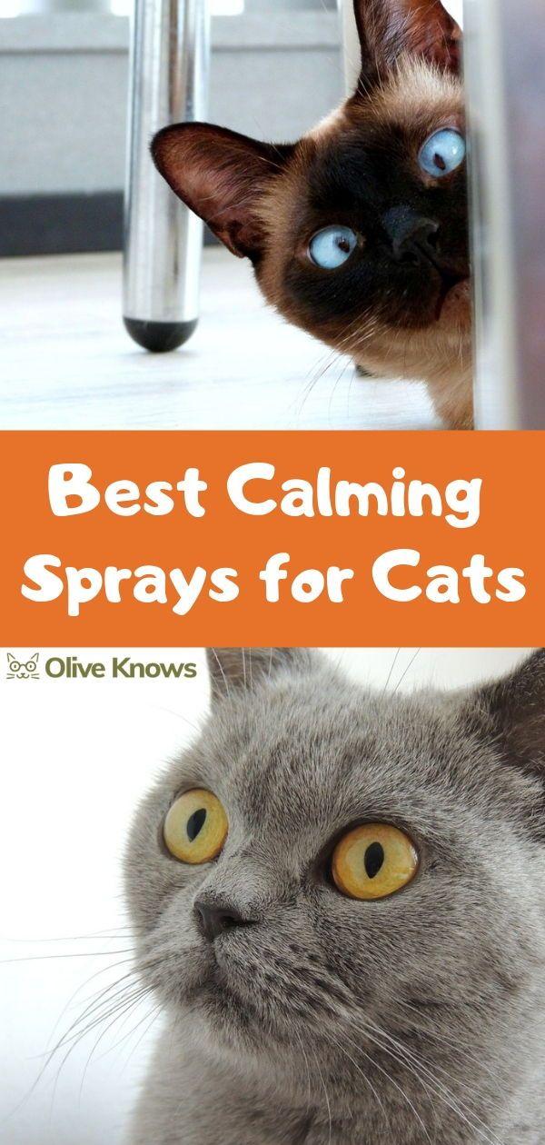 Best Calming Sprays for Cats Calming cat, Cat health
