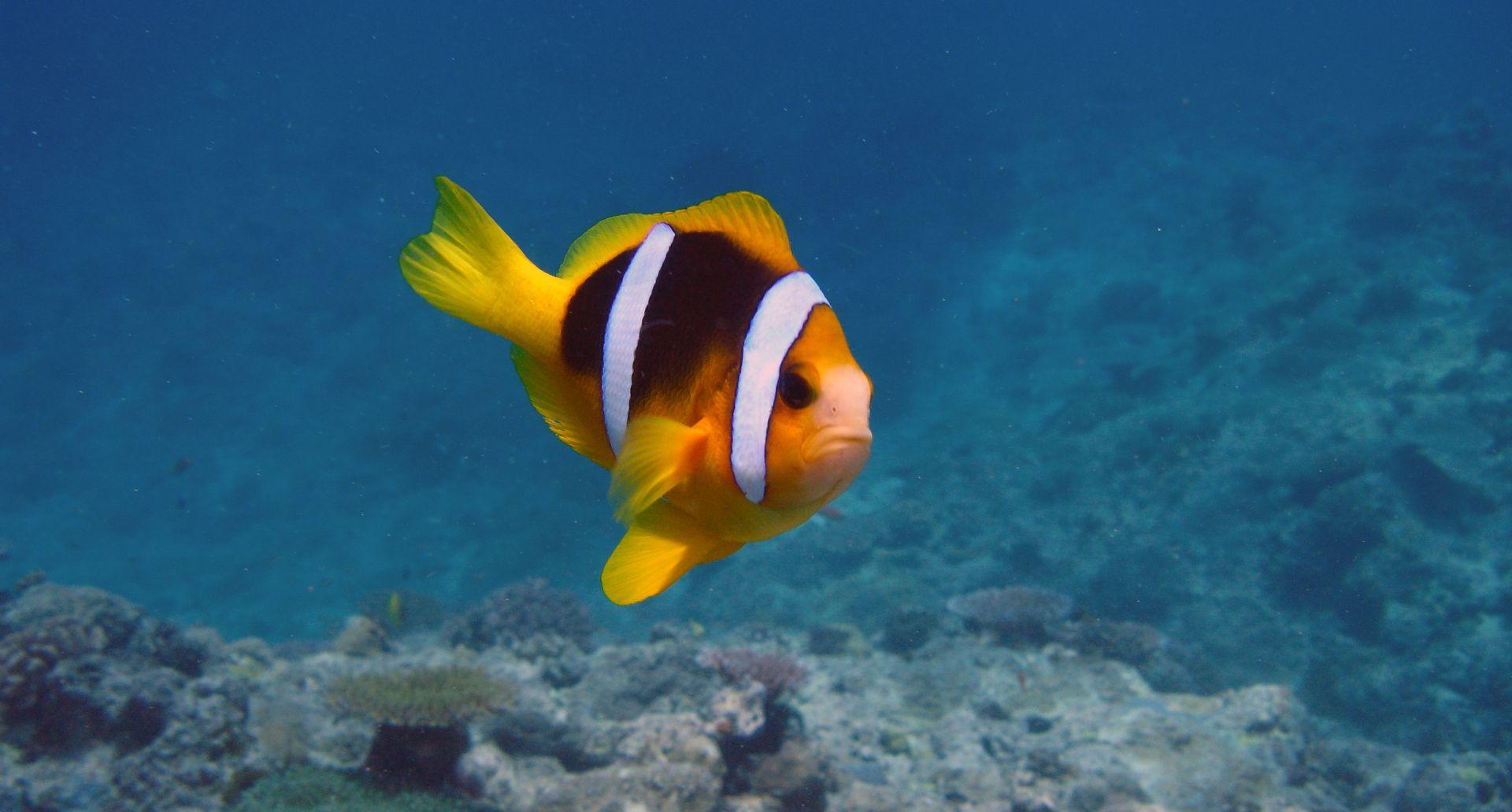 cf3c0dadeef2f1f756aa241e4555b44e Frais De Fabriquer Aquarium Concept