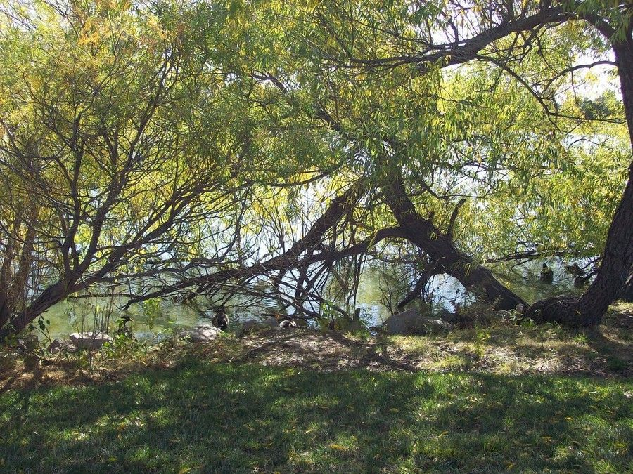 Shady Branches of Fun by Allison Jaeger on 500px