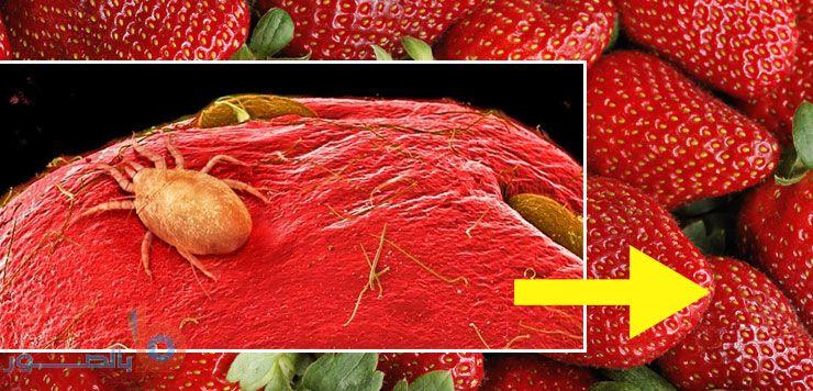 صور ة الفراولة تحت المجهر