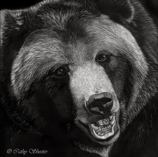 Grizzly Bear Face Drawing images   Art Ideas