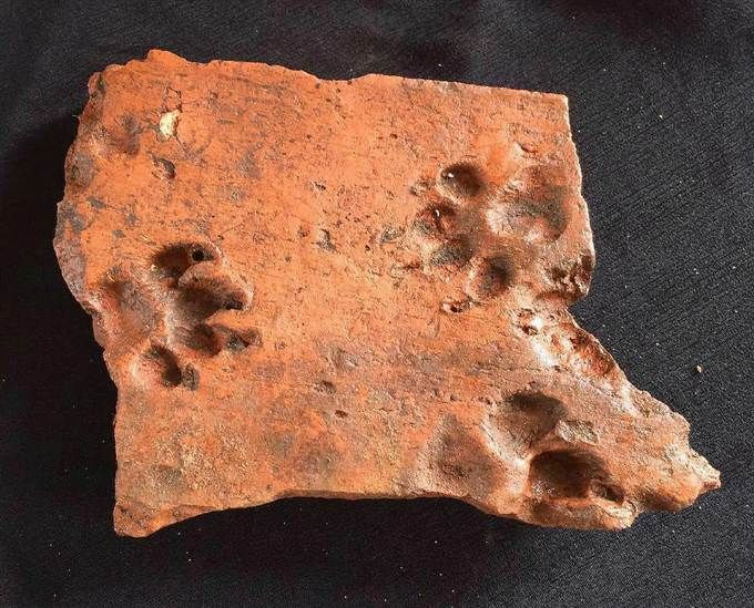 Image: A dog pushed its paws into this ancient Roman tile before it could dry.