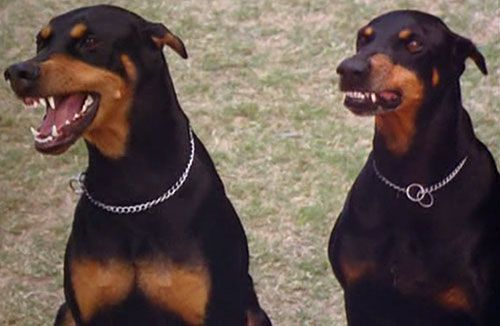 Magnum Pi Dogs Names